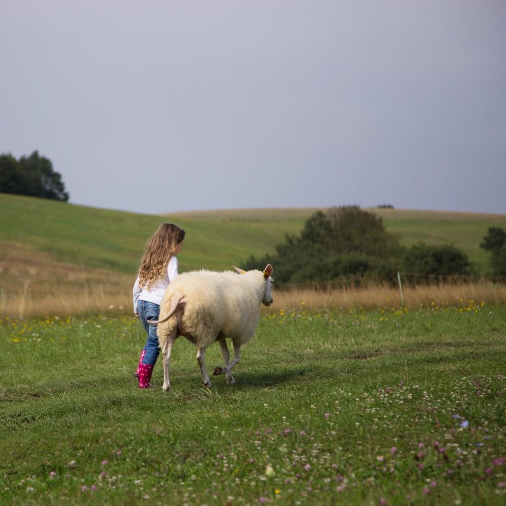 Een meisje met een schaap aan de wandel