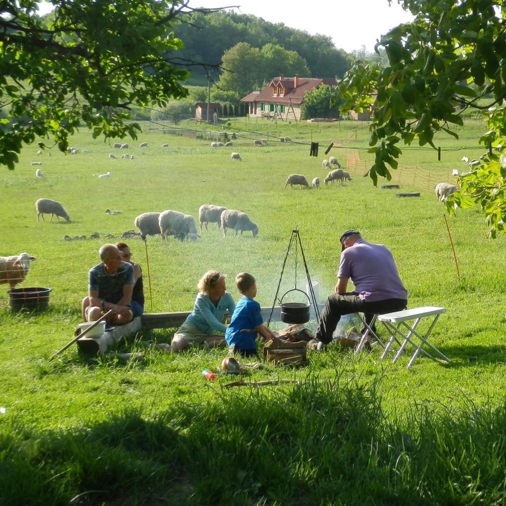 Grasveld met schapen en een vuurtje met een kookpot erboven