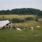 Heuvelland met een tent, mensen op stoeltjes en geiten in het gras