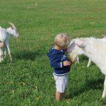 Jonge kinderen knuffelen witte geiten bij Farm Camp Lazy Slowakije