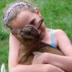 Een meisje knuffelt een klein geitje