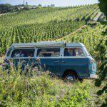 Blauw camperbusje tussen de wijnranken