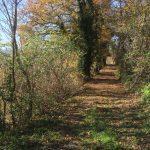 Een breed pad met bomen aan weerszijden, in herfsttinten