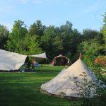Tenten op een veld in het bos