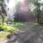 Zonnestralen door de bladeren heen schijnen op het kampeerveld