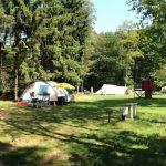 Open kampeerveld in het bos met veel schaduw