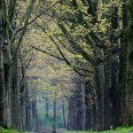 De omgeving van Landgoed de Hoevens met een lange laan met bomen
