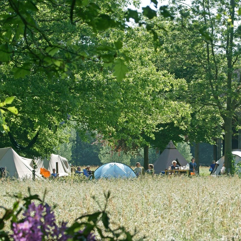 Veld met hoog gras en daar tussen tenten