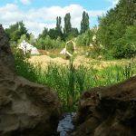 De groene omgeving van Ecostay de Wildernis.