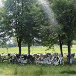 Een verzameling witte fietsen onder de bomen