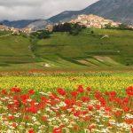 Een dorpje op een heuvel met daarvoor een veld vol klaprozen