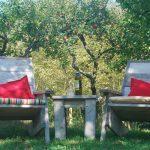 Houten tuinstoelen met rode kussentjes in een boomgaard