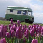 Een groene Mercedes camperbus, tussen de paarse tulpen