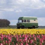 Een groene Mercedes camperbus tussen de bloeiende tulpen in geel en rose