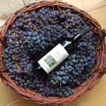 Een fles wijn in een mand gevuld met druiven.