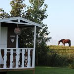 Pipowagen met paard in de wei