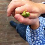 Kinderhanden houden een groen kikkertje vast