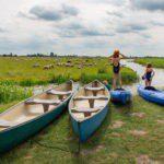 Kano's en kayaks aan de over van het riviertje, met meisjes in badpak aan de kant en schapen op de achtergrond