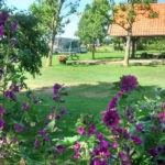 Paarse bloemen met op de achtergrond de overdekte kampvuurplek