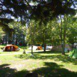 Verschillende De Waard tenten tussen de bomen.