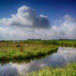Een sloot tussen wijlanden met 2 schapen en een mooi bewolkte lucht.
