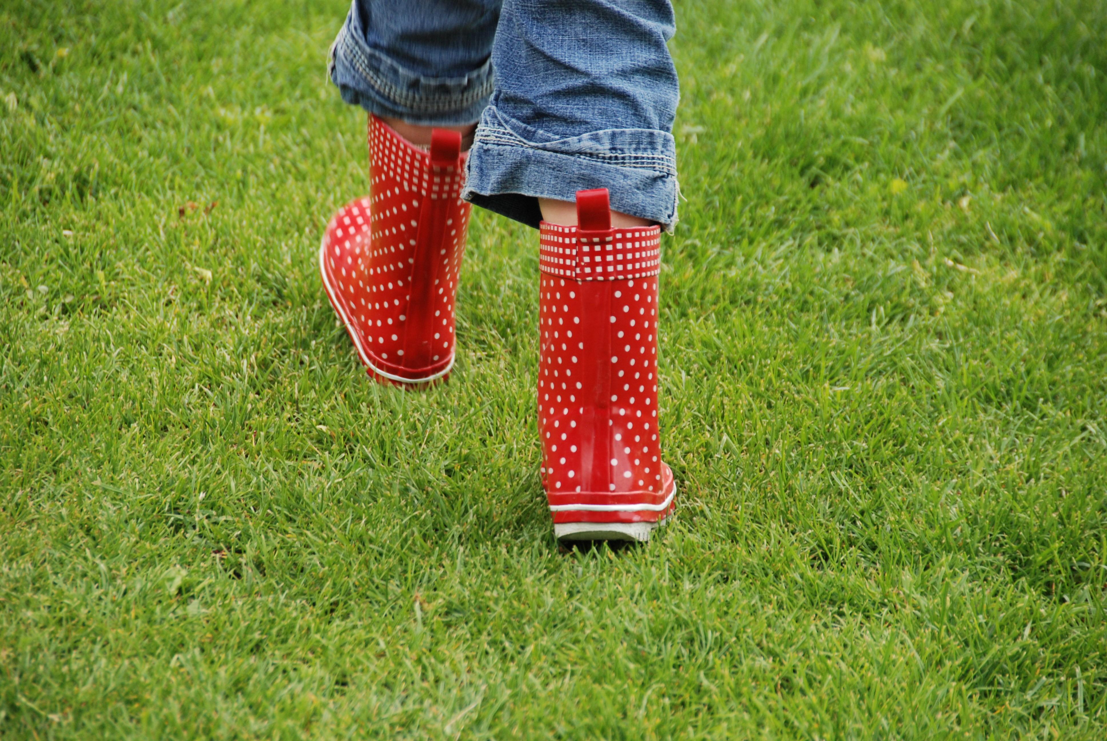 Rode regenlaarsjes met witte stippen in het groene gras.