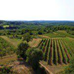 Uitzicht op de wijnvelden bij Camping de Salviac in Frankrijk
